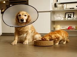 Veja como entrar em contato com instituições que resgatam animais ...