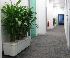 floor plant large floor displays gaddys plant hire
