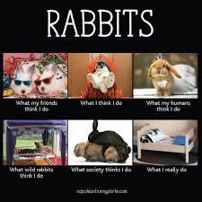 Funny Rabbit Memes - rabbit ramblings funny bunny memes bunnies pinterest funny