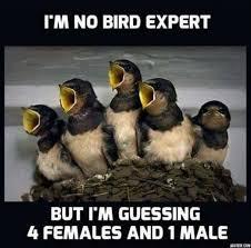 Funny Bird Memes - sad bird meme best bird colletion 2018