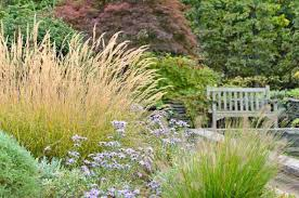 ornamental landscape grasses new new garden best ornamental grasses