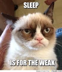 Sleepy Cat Meme - meet rocket groot nov 26 dec 1 page 10 d3 go forums