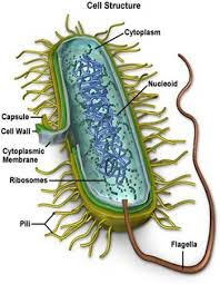 Types Of Bacterial Diseases In Plants - important roles that bacteria plays in our lives