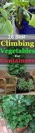 17 best climbing and vining vegetables for containers you can grow