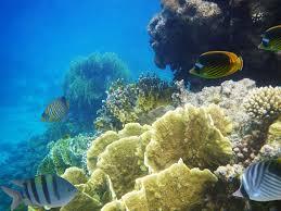 Mississippi snorkeling images 3 reef snorkeling tour cozumel amstar excursion jpg
