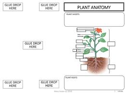 plants adaptations tropisms hormones graphic organizer foldable