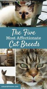 Cat Facts Meme - 7 facts that prove cats are awesome 1 a cat s purr can heal