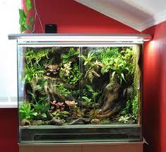 14 best reptiles images on pinterest reptile terrarium gecko