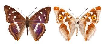 butterflies and moths written on wings arts culture
