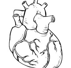 coloring pages adults human heart coloring interior