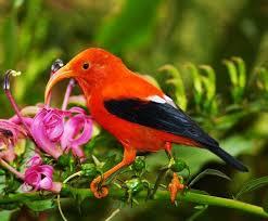 Hawaii birds images 121 best birds of hawaii images hawaii beautiful jpg