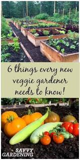 easy vegetables for beginning gardeners small vegetable gardens