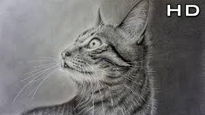 imagenes a lapiz de gatos cómo dibujar un gato realista a lápiz paso a paso tutorial youtube