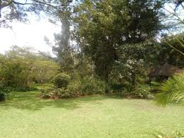 5 bedroom standalone office in lavington office for rent or for