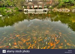 Family Gardens Fish Pond In The Zhu Family Gardens In Historical Jianshui In