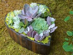 Valentine S Day Garden Decor by Succulent Heart For Valentine U0027s Day 1001 Gardens