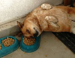 dog sitting rates in home dog diy home plans database
