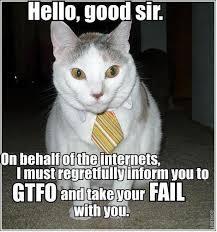 lol cat says