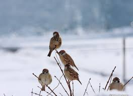 asia frozen tree snow birds cold small japan winter bare ultra hd