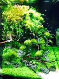 Aquascape Environmental 71 Best Aquascape Images On Pinterest Aquascaping Planted