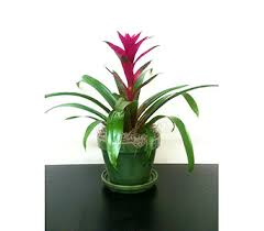 florist naples fl plants delivery naples fl driftwood garden center florist
