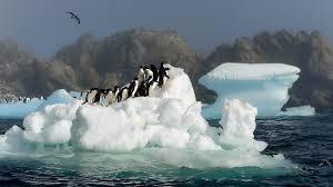 animals penguins birds icebergs world wild animal image for hd 16