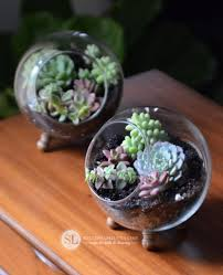 Succulents That Don T Need Light How To Make A Glass Globe Terrarium Diy Succulent Dish Garden