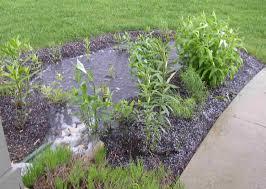native plants for rain gardens bisognin dress tibetan mastiff vs lion plants in desert shootpixel