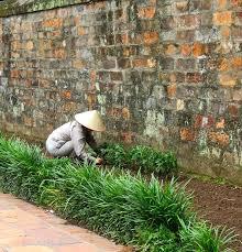 Flower Garden Hanoi by Gardens Of Hanoi