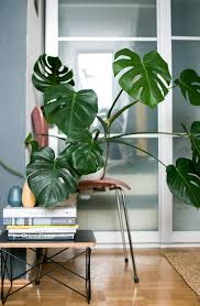 Plant For Bedroom Plants For Bedroom 17 Plant Filled Instagrams That Will Turn Your