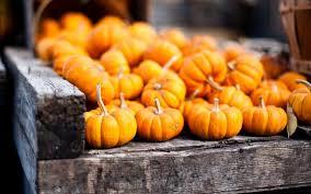 autumn pumpkin wallpaper widescreen wallpaper abyss 6889260