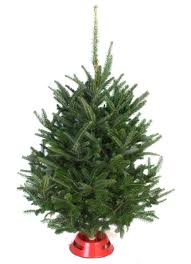shop for christmas trees at the garden gates