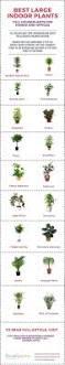 indoor climbing plant support indoor rubber tree plant indoor potted