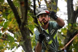 summer tree pruning bob ray company