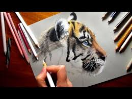 colored pencil drawing cute tiger cub speed draw jasmina susak