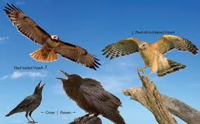 Hudson valley birds visitvortex magazine articles