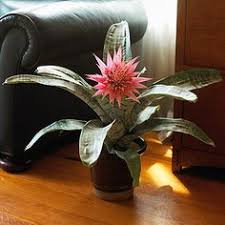 What Plants Are Cubicle Friendly by