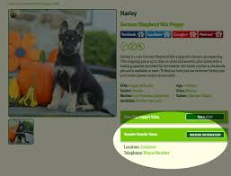 bluetick coonhound price contact us puppies questions and more greenfield puppies