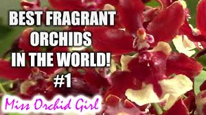 Highly Fragrant Plants Best Fragrant Orchids In The World 1 Youtube