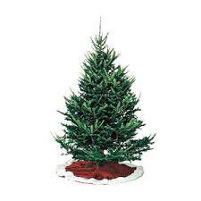 balsam fir christmas tree the types of common christmas trees allyou
