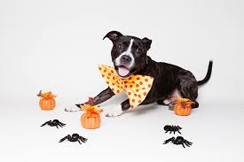 funny halloween costume ideas for your dog perropet