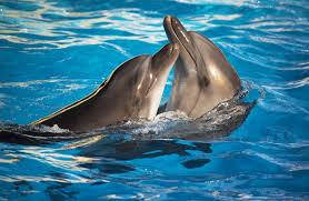 dolphin trainer clipart clipartxtras