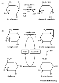 biotechnological perspectives of pyrolysis oil for a bio based