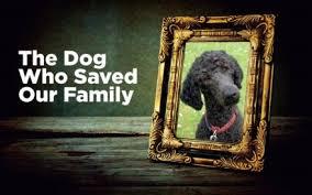 Family Pet And Garden Center - 50 secrets your pet won u0027t tell you reader u0027s digest