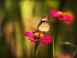 Butterfly Flower Wallpaper Butterfly Flower Colorful Grass Hd Picture Image
