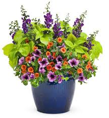 potted flowers 423 best potted plants flowers etc for decks and verandas images