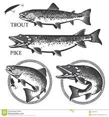 vintage trout fishing emblems labels and design stock vector