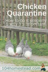 you need to quarantine your flock correctly birds kind of and