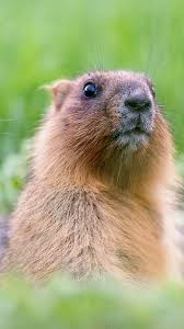 groundhog day roots astronomy holiday spiritual meaning