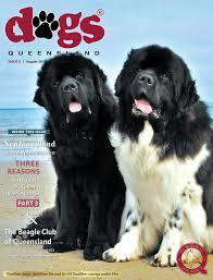 australian shepherd queensland dogs queensland the queensland dog world issue 8 august